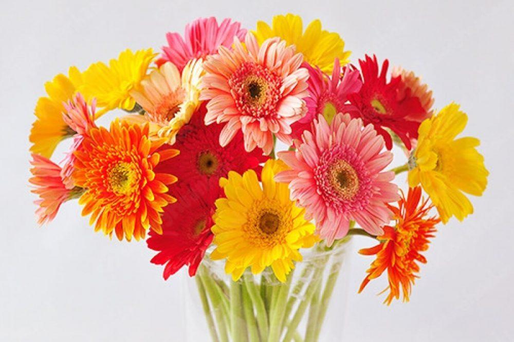 Chọn hoa cúng
