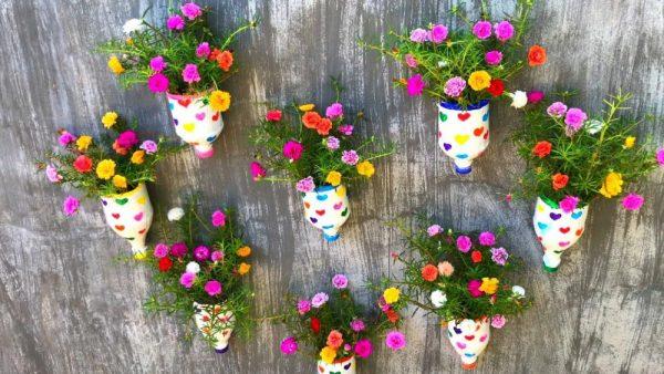 Cách chăm sóc hoa mười giờ đúng cách