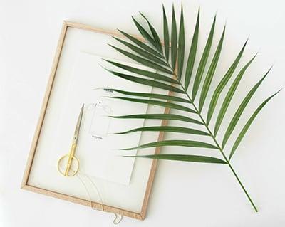 3 cách tỉa lá dừa thông dụng nhất hiện nay vô cùng đơn giản
