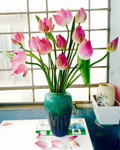 Cách cắm hoa sen đẹp dưới mọi góc nhìn