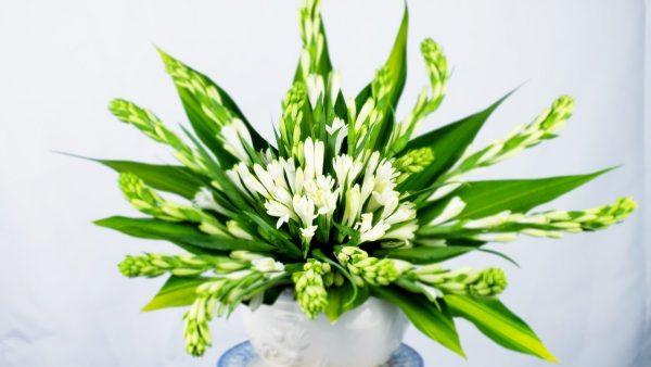 Những điều cần lưu ý khi cắm hộp hoa huệ trắng