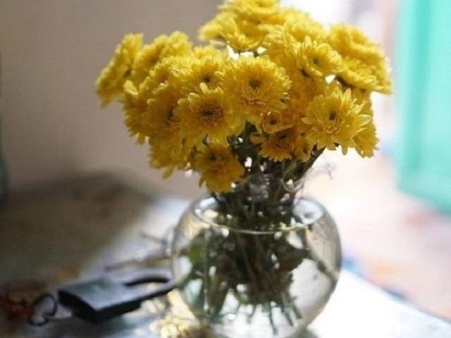 Cách cắm hoa cúc trang trí cho ngôi nhà nhỏ